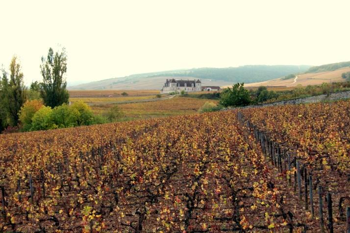 Parreiral do Château du Clos de Vougeot - um dos mais famosos da Borgonha