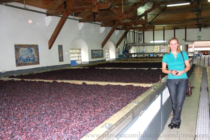 Uvas nos lagares de fermentação