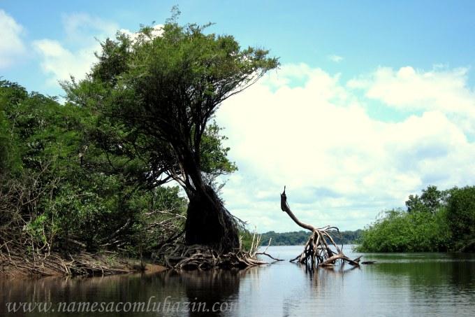 Paisagem num igarapé que exploramos no Rio Negro