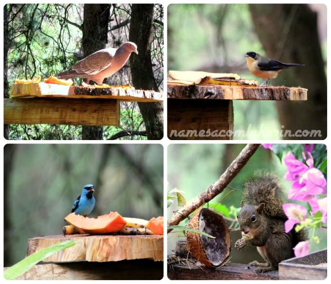 """Alguns dos pássaros que tomam café junto com os hóspedes (o de cima do lado esquerdo é a """"Asa Branca"""" do sertão, cantada por Luiz Gonzaga"""