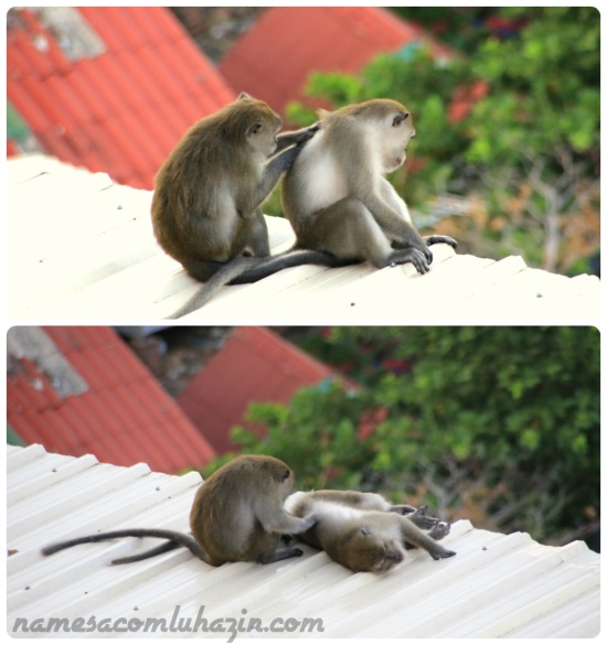 """Macacos aguardam hóspede dar """"mole"""" para roubarem o café da manhã no hotel de Phi Phi"""
