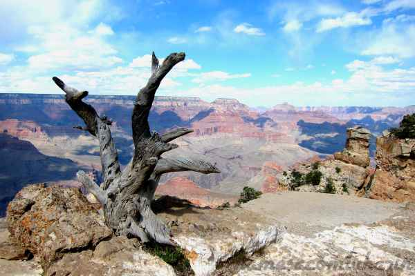 Grand Canyon - Arizona - EUA