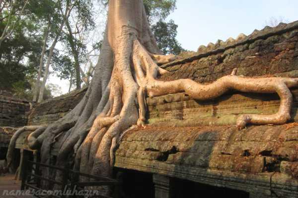 Cenário do filme Tomb Rider no templo Ta Phrom