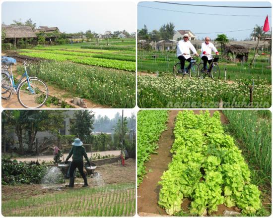 Plantações de verduras/legumes que abastecem Hoi An